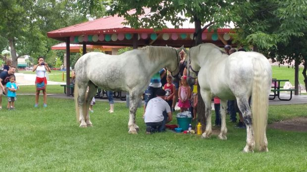 JR teaching the kids fun facts about horses and the draft horse breed, Percherons.